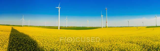 Germany, Saxony, Wind turbines in oilseed rape field — Stock Photo