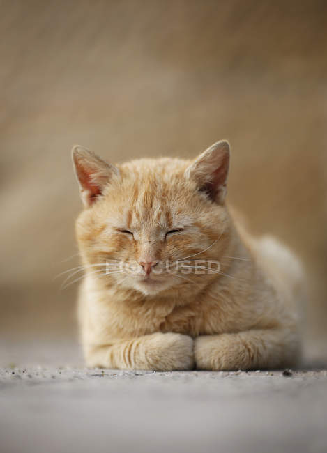 Tired ginger cat lying on the ground — Stock Photo