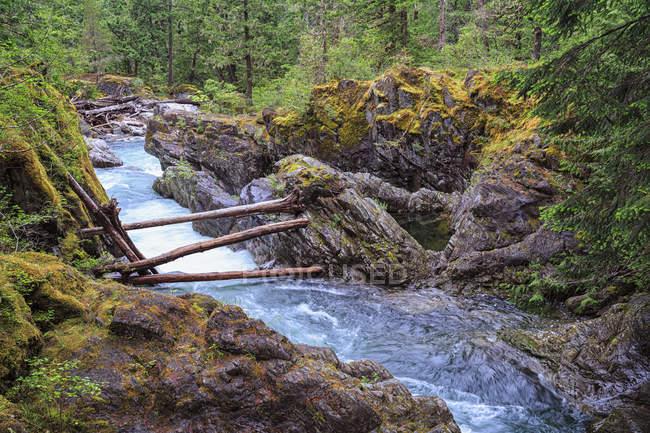 Canada, Columbia Britannica, Vancouver Island, Little Qualicum Falls Provincial Park — Foto stock