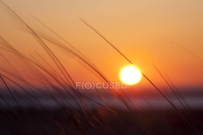 Deutschland, Niedersachsen, Ostfriesland, Borkum, Nationalpark Niedersächsisches Wattenmeer, Sonnenuntergang — Stockfoto