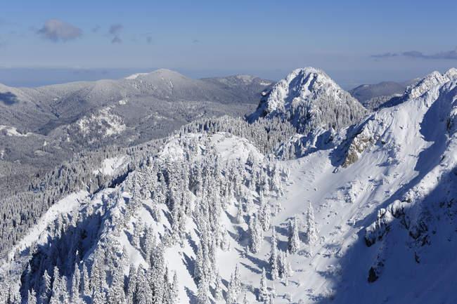 Германия, Бавария, снега ограничен гора Тегельберг — стоковое фото