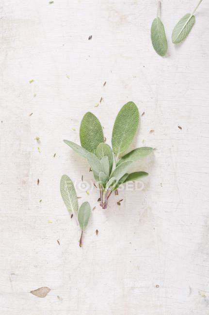 Fresh sage on white chopping board, studio shot — Stock Photo