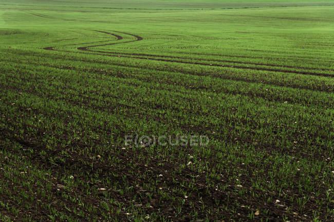 Німеччина, Баварія, Holzen, кукурудзу Ф'єль і весна — стокове фото