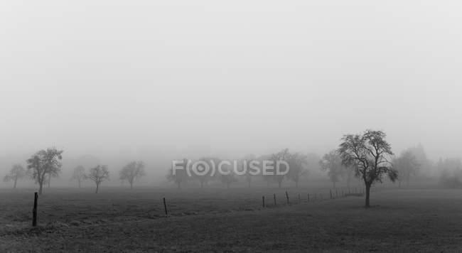 Alemanha, Renânia do Norte-Vestefália, Aachen, Prado com macieiras em novembro nevoeiro — Fotografia de Stock