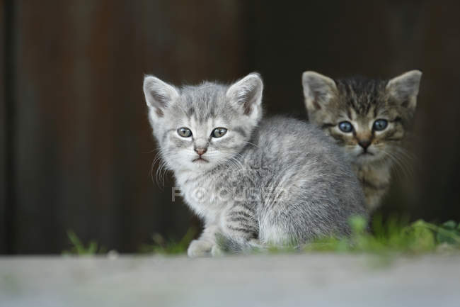 Kittens sitting outdoors and looking at camera — Stock Photo