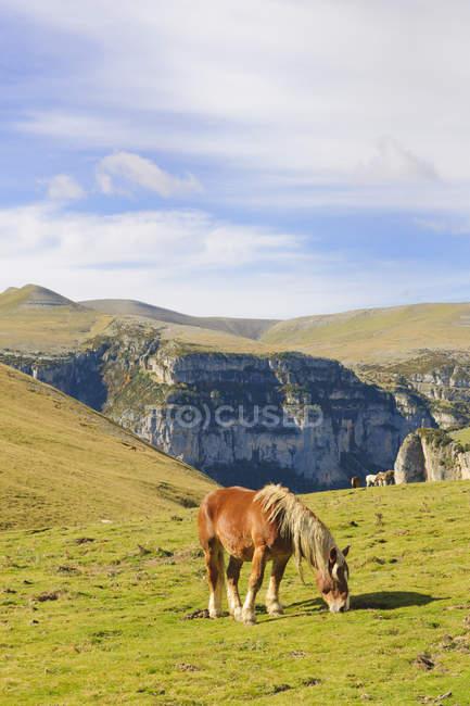 Іспанія Арагон у Піренеях, Ordesa y Монте Perdida Національний парк, Canon de Anisclo, дикі коні випасу на луг — стокове фото