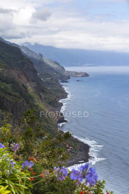 Flores desabrochando nos penhascos da Madeira em Arco S Jorge, Madeira, Portugal — Fotografia de Stock