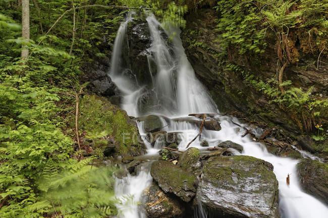 Австрия, Штирия, Вид на водопад в зеленом лесу — стоковое фото