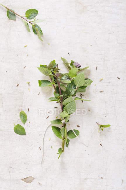 Brindilles de menthe poivrée fraîche sur une surface en bois blanc — Photo de stock