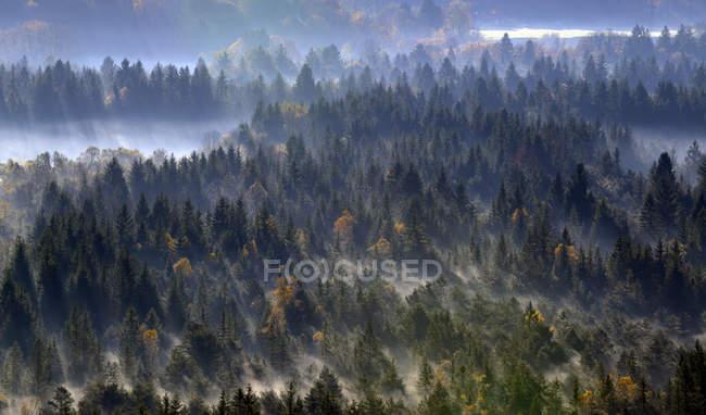 Germany, Bavaria, Upper Bavaria, Icking, Pupplinger Au, forest  during daytime — Stock Photo