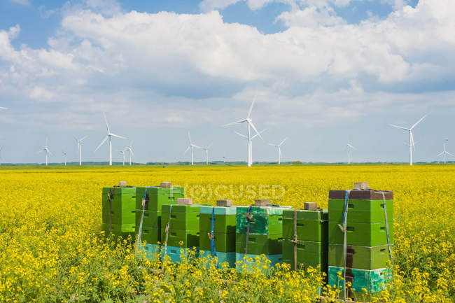 Germany, Schleswig-Holstein, View of stacked boxes in field with wind turbine in background — Stock Photo
