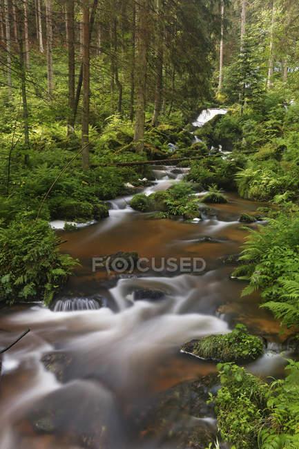 Австрия, Нижняя Австрия, Вид на водопад в зеленом лесу — стоковое фото
