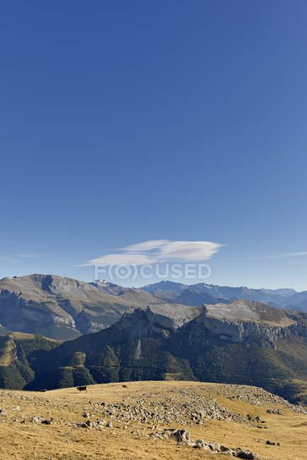 Іспанія Арагон у Піренеях, Ordesa y Монте Perdida Національний парк, Canon de Anisclo, великої рогатої худоби на Луці — стокове фото