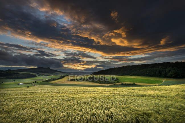 Germania, Baden Württemberg, Costanza, vista del campo di frumento nel tramonto — Foto stock