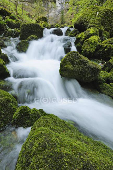 Жизненно зеленый весной хвоя вдоль реки Orbe (Vallorbe). Orbe река, Vallorbe, Юра, горы Юра, Швейцария, Европа. — стоковое фото