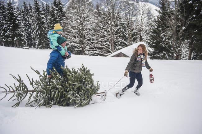 Сімейні прогулянки у сніг і потягнувши fir дерево, Altenmarkt-Zauchensee, Зальцбург, Австрія — стокове фото