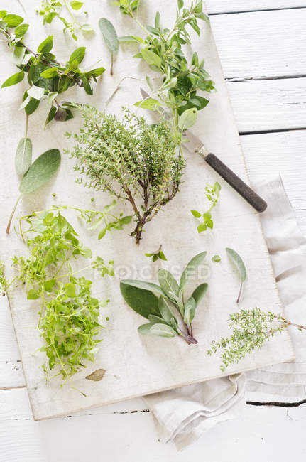 Fresh mixed herbs like sage (Salvia), oregano (Origanum vulgare), thyme (Thymus), chickweed (Stellaria media) and peppermint (Mentha piperita) on white chopping board with knife and napkin — Stock Photo