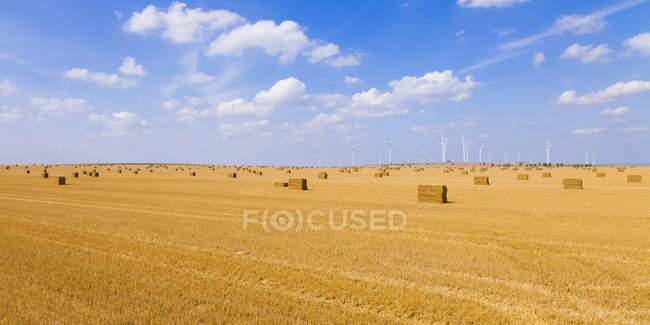 Alemanha, Saxónia-Anhalt, Magdeburg Boerde, Campo de restolho com fardos de palha e parque eólico em segundo plano — Fotografia de Stock