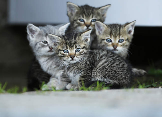 Tabby and grey kittens sitting side by side and looking at camera — Stock Photo