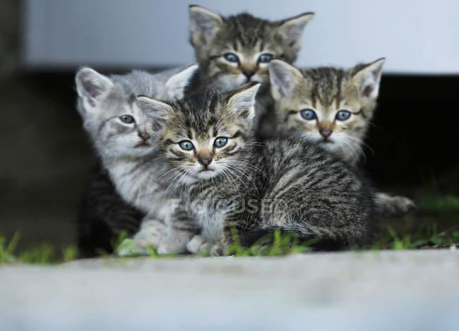 Табби і сірий кошенят, сидячи поруч і дивлячись на камеру — стокове фото
