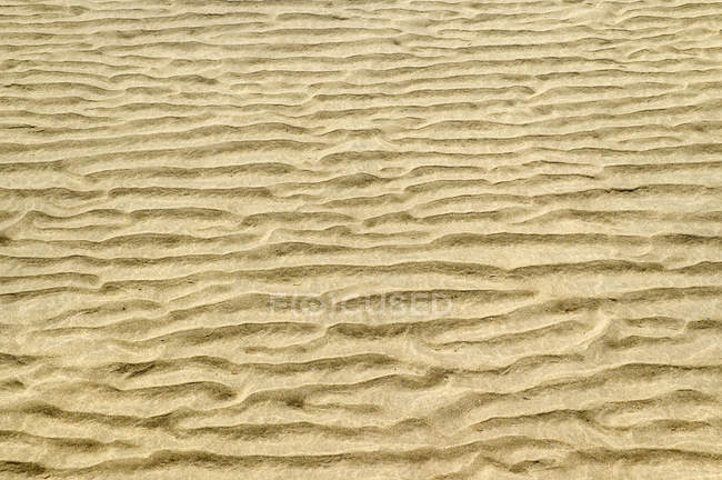 Natural pattern of ripple marks on sand — Stock Photo