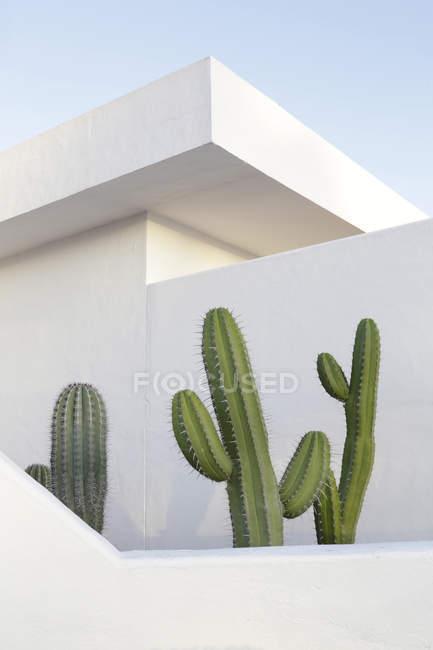 Spain, Lanzarote, Puerto del Carmen, Cactus growing between walls — Stock Photo