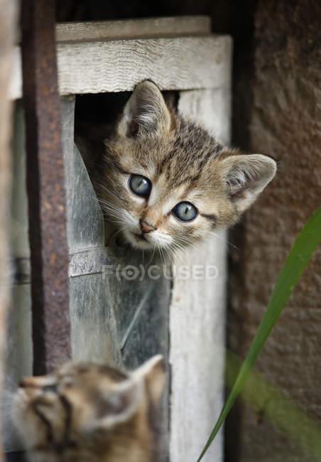 Kätzchen spielen in zerbrochenes Fenster im freien — Stockfoto