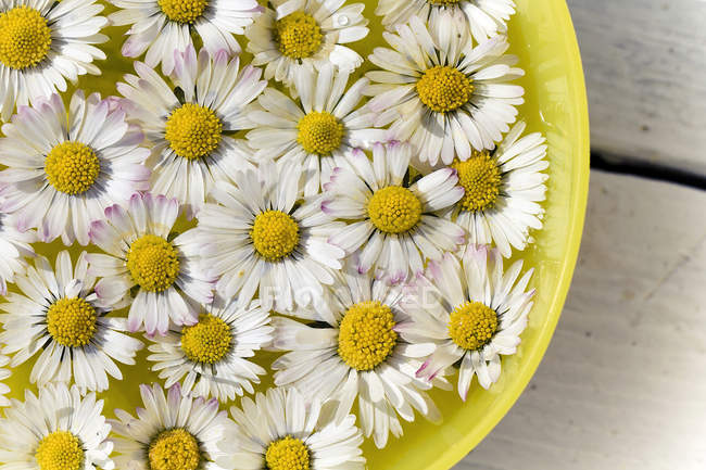 Daisy flowers in tub, close up — Stock Photo