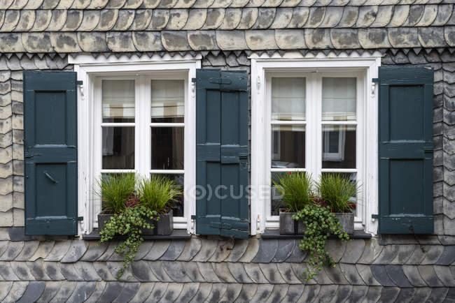 Deutschland, Nordrhein-Westfalen, Essen Kettwig, Archaeological Pflanze auf der Fensterbank — Stockfoto