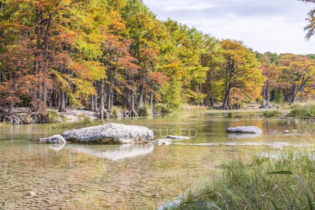 Stati Uniti, Texas, Concan, Texas Hill Country landscape in autunnali, alberi di cipresso al fiume Frio a Garner State Park — Foto stock