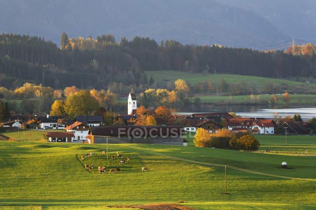 Germania, Baviera, Upper Bavaria, Pfaffenwinkel, Riegsee, Mostra di campo con erba verde ed edifici — Foto stock