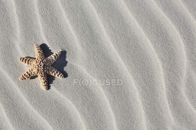 Allemagne, Basse-Saxe, Frise orientale, Langeoog, poissons de mer sur la plage de sable — Photo de stock