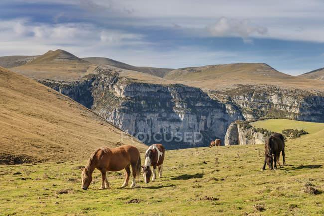 Espanha, Aragão, Central dos Pirenéus, Parque Nacional de Ordesa y Monte Perdida, Canon de Anisclo, cavalos selvagens no Prado — Fotografia de Stock