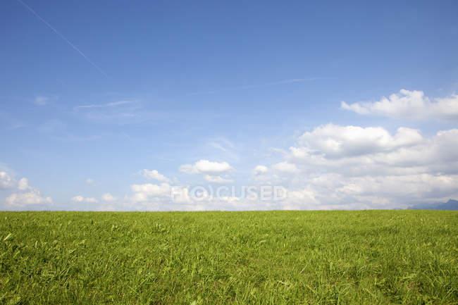 Germany, Bavaria, Green field on sunny day — Stock Photo