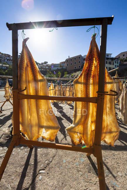 Portugal, Stockfish pour séchage à Camara de Lobos près de Funchal — Photo de stock