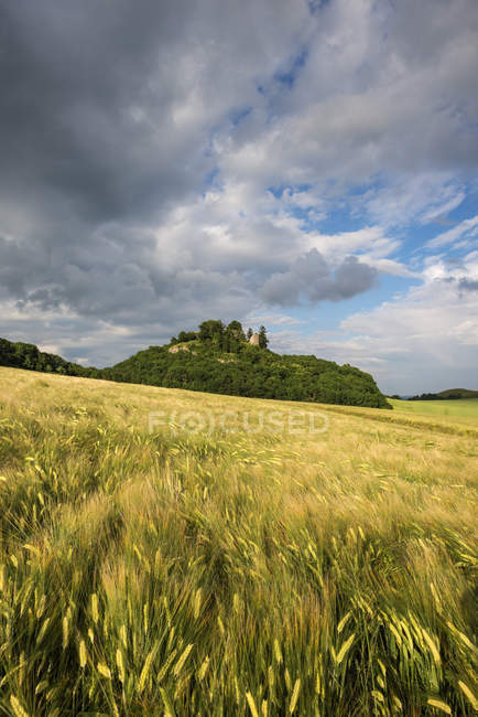 Scenic view of barley field in Hegau landscape of Germany — Stock Photo