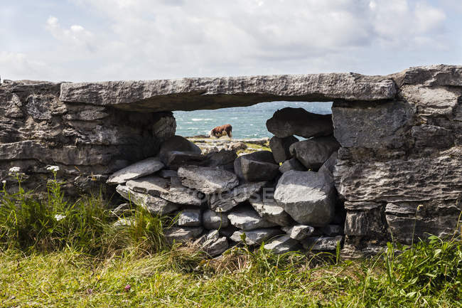 Irlanda, Condado de Clare, Parede de pedra no oceano Teh perto de Doolin — Fotografia de Stock