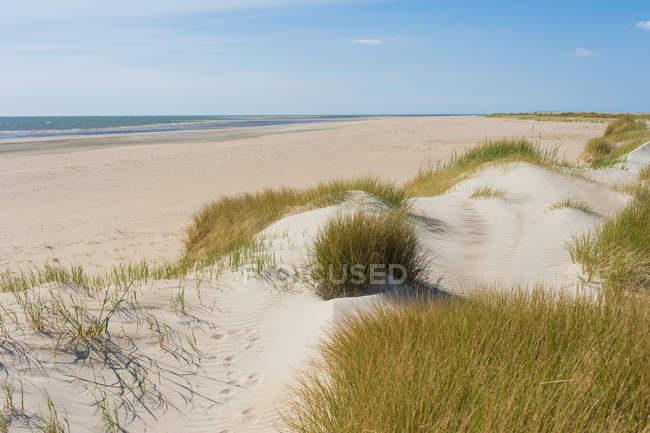 Данія, Ромо, піщані дюни в Північному морі денний час — стокове фото