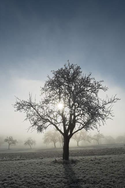Prado com árvores de fruto dispersas e lufada de névoa em Baden-Wuerttemberg, na Alemanha — Fotografia de Stock