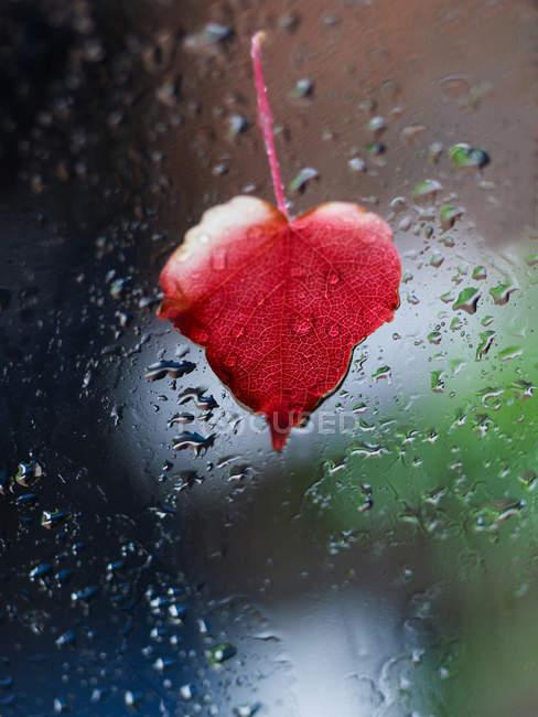 Сердце образный красный лист прилипания на окне полный капель — стоковое фото