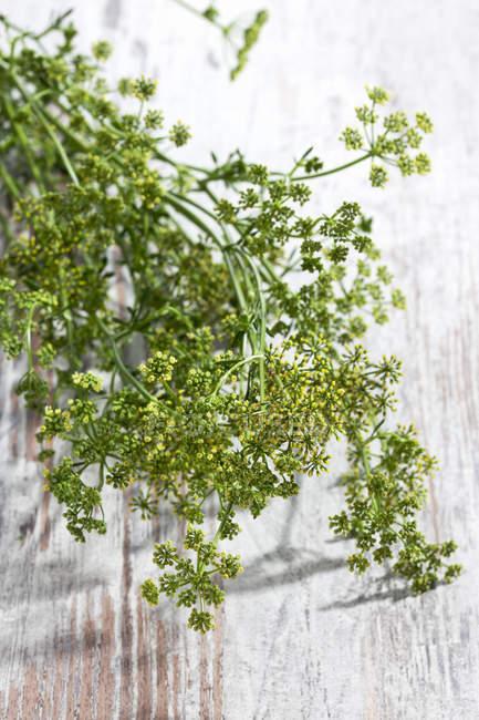 Perejil ramitas de flores en la superficie de madera - foto de stock