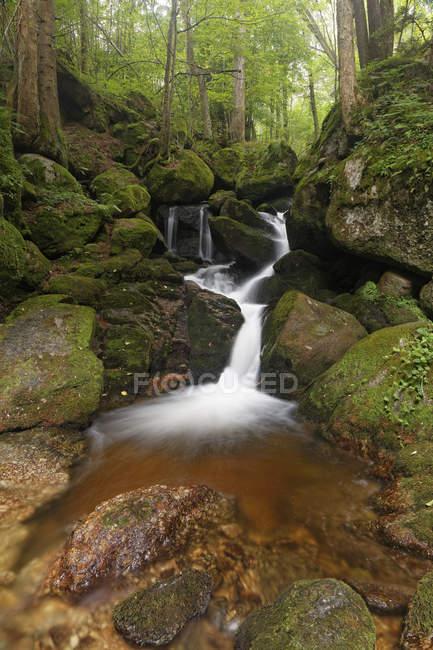 Austria, Baja Austria, Valle de Ysper, gran paisaje de Ysper y cascada entre rocas en el bosque verde - foto de stock