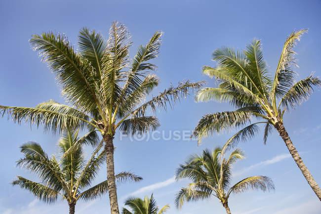 Stati Uniti, Hawaii, vista delle palme contro il cielo — Foto stock