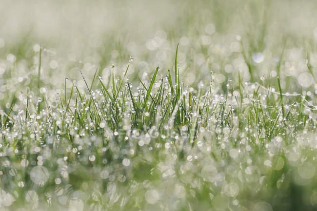 Роса на зеленой траве в дневное время — стоковое фото