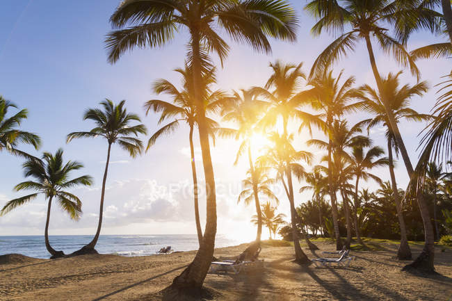 Tropical beach with palm trees at sunset, Dominican Rebublic — Stock Photo