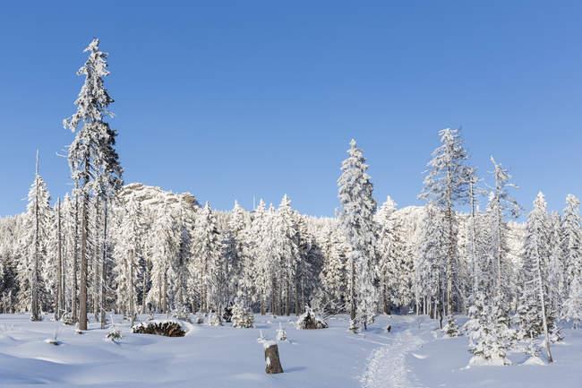 Allemagne, Bavière, piste de montagne Grosser Arber à forêt bavaroise — Photo de stock