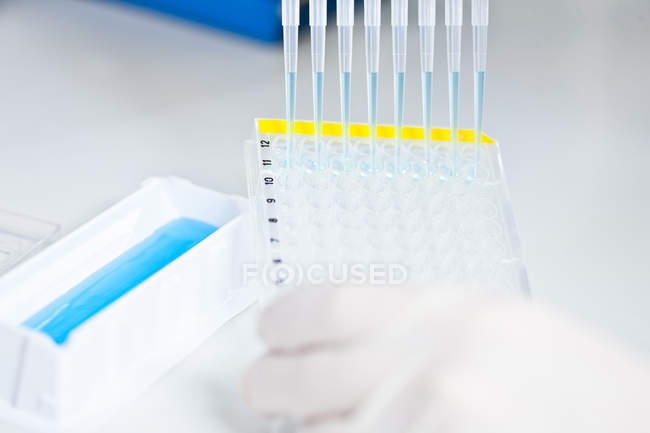Human hand pipetting blue liquid into 96 well plate — Stock Photo