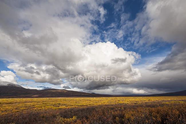 Paysage le long de la route de Denali à l'automne avec un ciel nuageux sur l'arrière-plan, Alaska, Usa — Photo de stock
