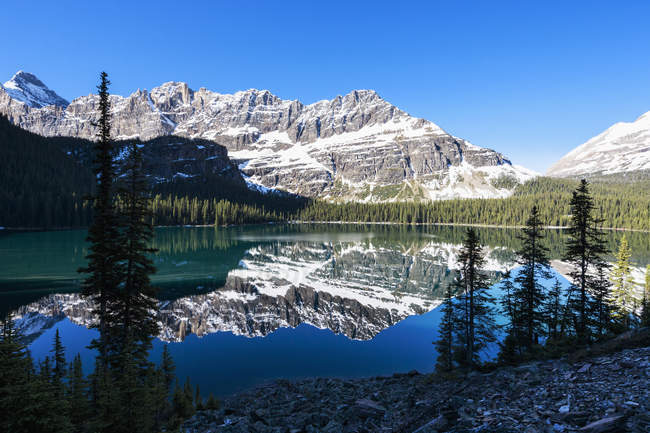 View of Lake O'Hara with mountains and trees under blue cloudy sky at Yoho National park, British Columbia, Canada, — Stock Photo