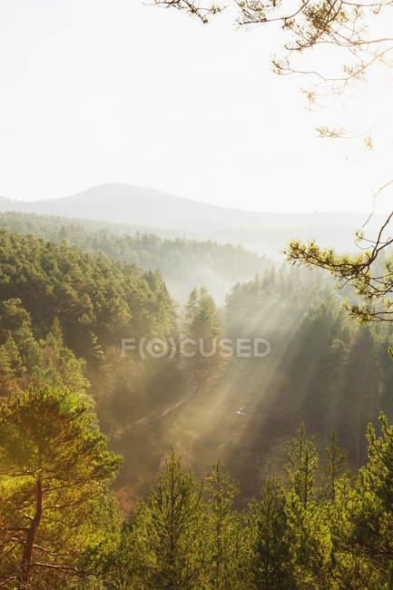 Germania, Renania-Palatinato, Palatinato Foresta-Vosgi del Nord Riserva della Biosfera in una giornata nebbiosa — Foto stock